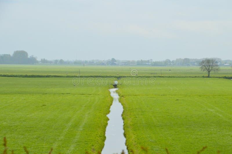 Terreno coltivabile olandese intorno a Weesp i Paesi Bassi immagine stock libera da diritti