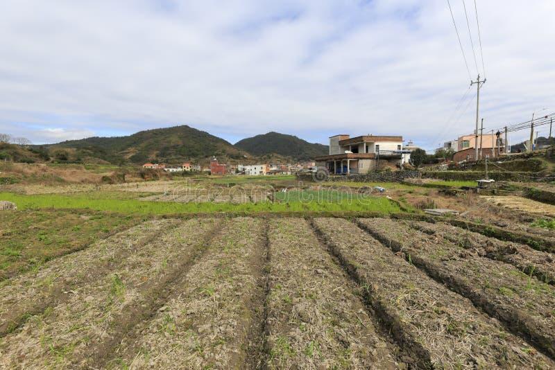 Terreno coltivabile ordinato della primavera fotografie stock