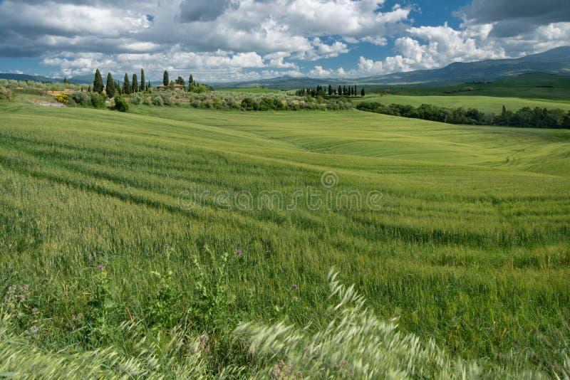 """Terreno coltivabile in Val d """"Orcia Toscana fotografie stock libere da diritti"""