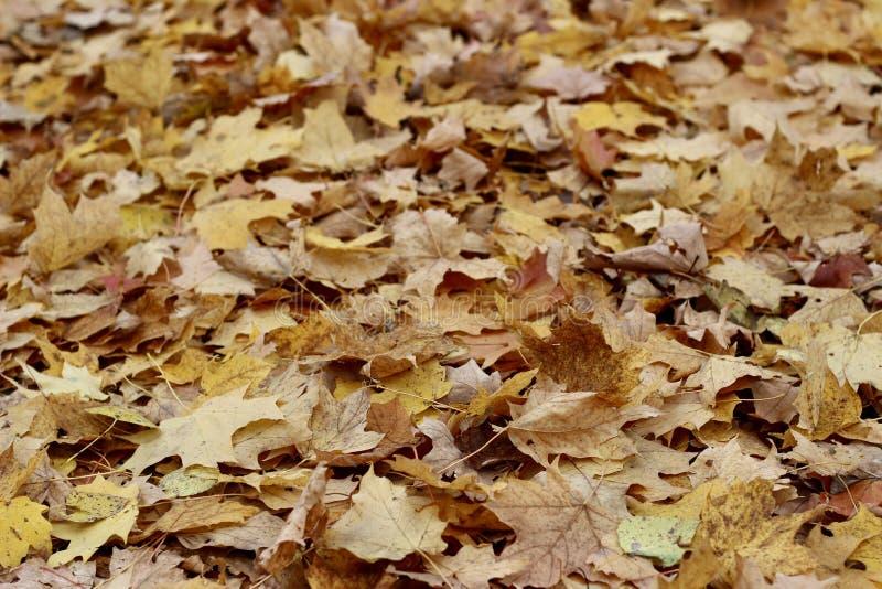 Terreno cubierto de hojas de otoño imagen de archivo libre de regalías