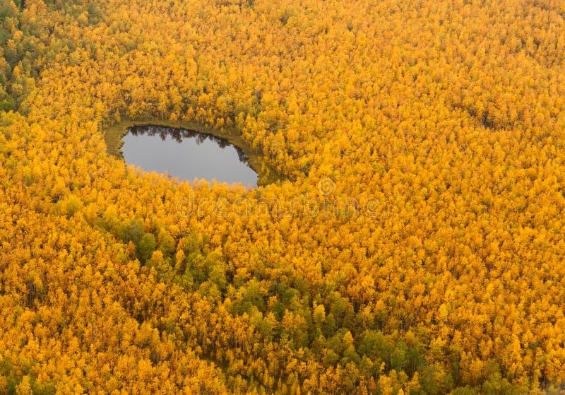 Terreno da floresta com o lago no outono, vista superior foto de stock royalty free