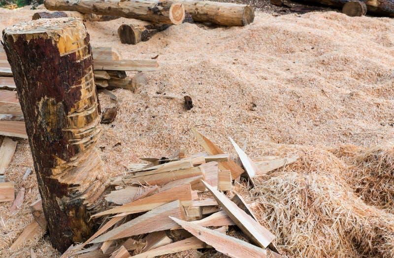 Terreno de entrenamiento para el encargado y el leñador del bosque para cortar la madera y registros con una motosierra para hace imagenes de archivo