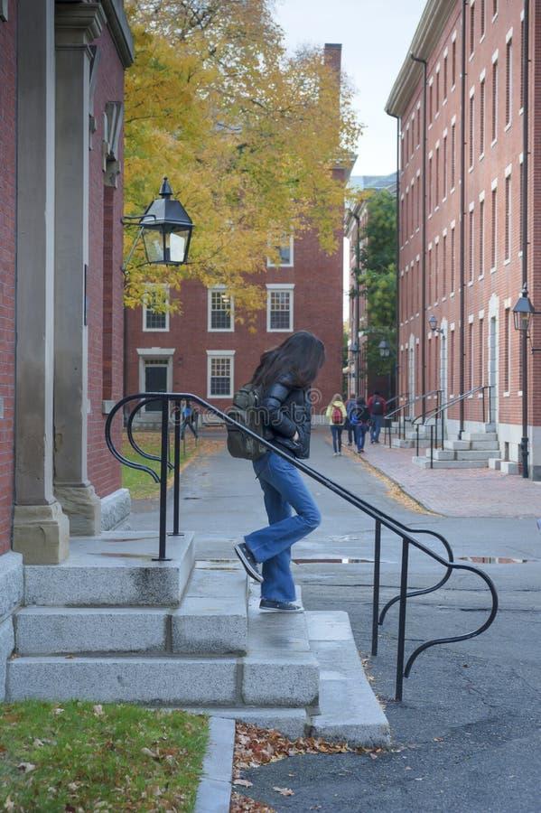 Terreno de Universidade de Harvard fotos de stock royalty free