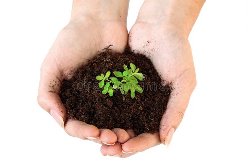 Terreno e pianta giovane in mani fotografia stock