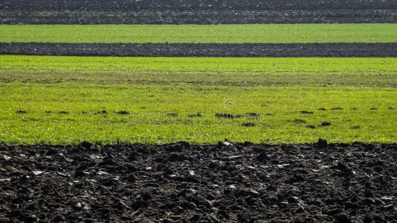 Terreno fertile immagine stock libera da diritti