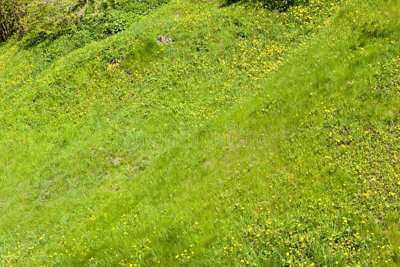 terreno montañoso de la hierba fotografía de archivo libre de regalías