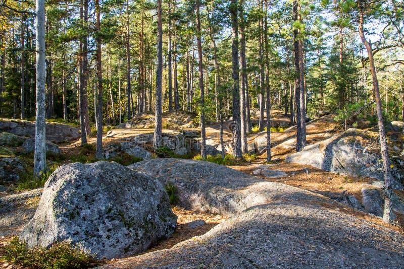 Terreno roccioso nella foresta fotografie stock