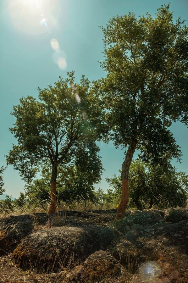 Terreno rocoso del campo y alg?n ?rbol de corcho pelado foto de archivo
