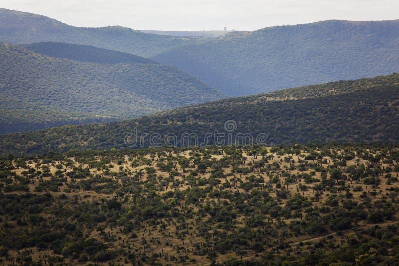 Terreno selvagem dos vales dos montes da vegetação das árvores do aloés