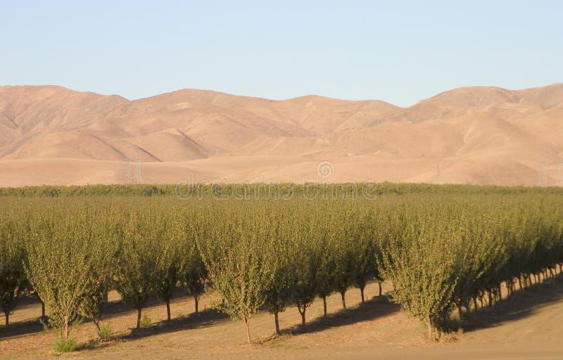 Terres cultivables #6 de la Californie photo stock
