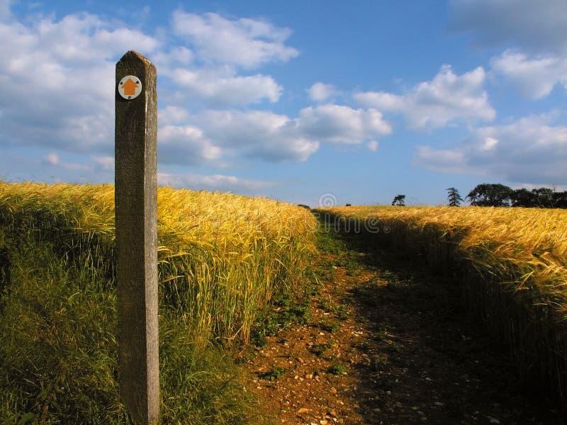 Terres cultivables avec des collectes de céréale image libre de droits