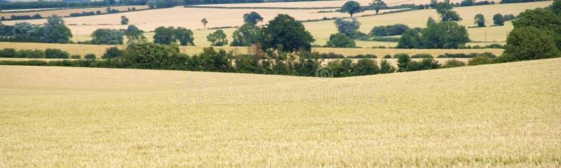 Terres cultivables avec des collectes de céréale photo libre de droits