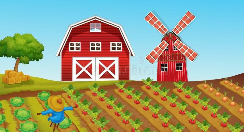 Terres cultivables avec des cultures à la ferme illustration stock