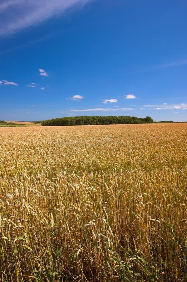 Terres cultivables dans Germanay photographie stock libre de droits