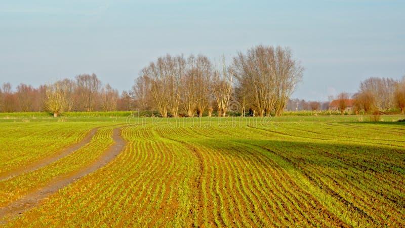 Terres cultivables dans la campagne flamande photographie stock libre de droits