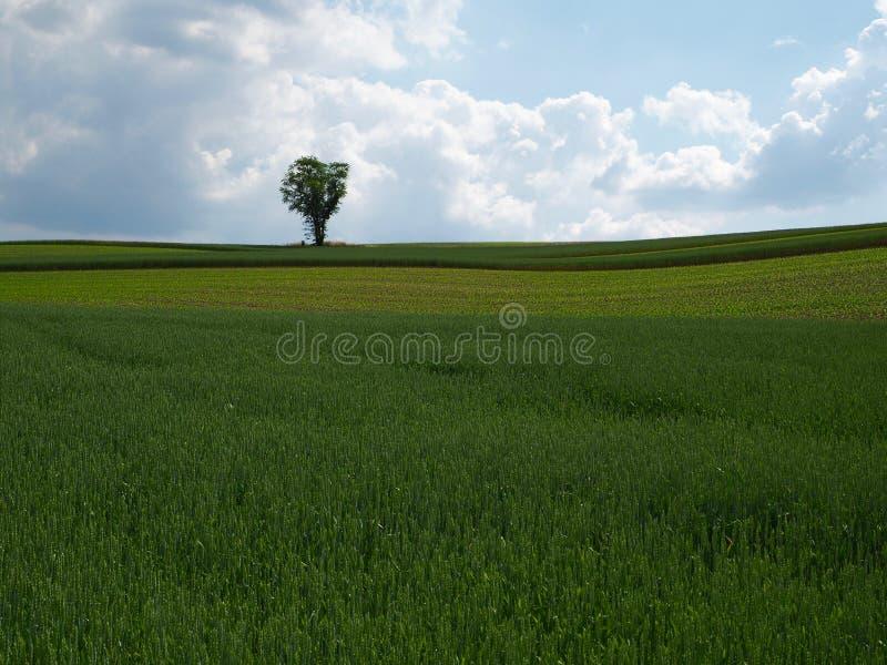 Terres cultivables de roulement avec l'arbre photographie stock libre de droits