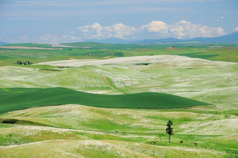 Terres cultivables de roulement sous le ciel bleu image libre de droits