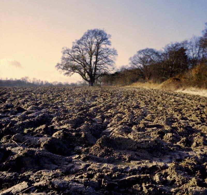 Terres cultivables en hiver images libres de droits