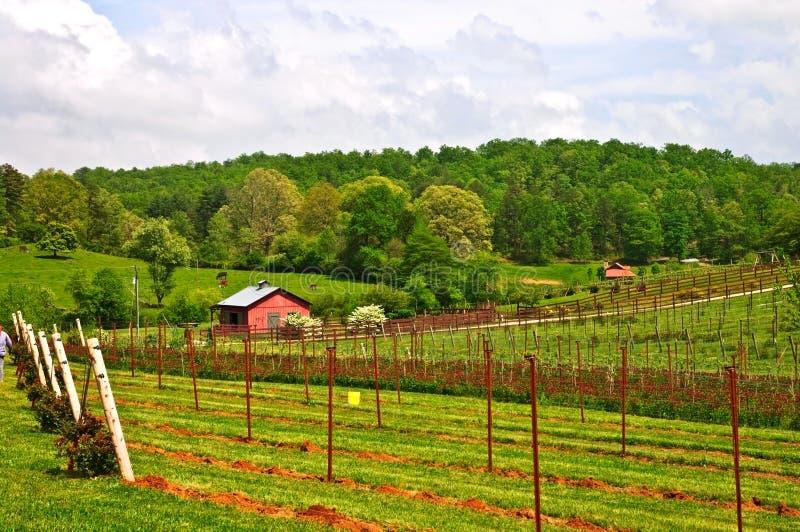 Terres cultivables et vignes de source photos libres de droits