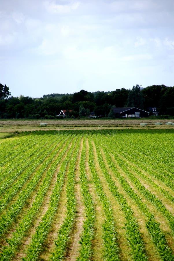Terres cultivables près d'Amsterdam photo stock