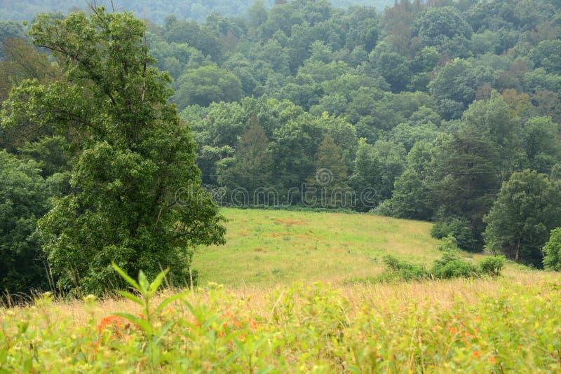 Terres cultivables scéniques images libres de droits