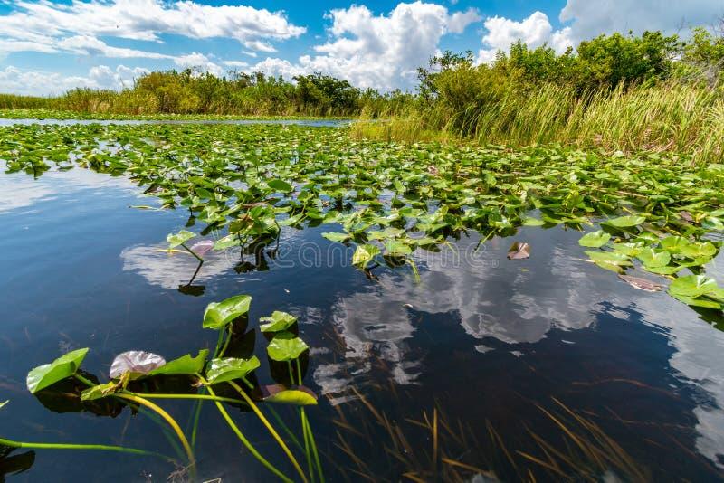 Terres humides du parc national des Everglades vues d'un tour en bateau, Floride, États-Unis d'Amérique photo libre de droits