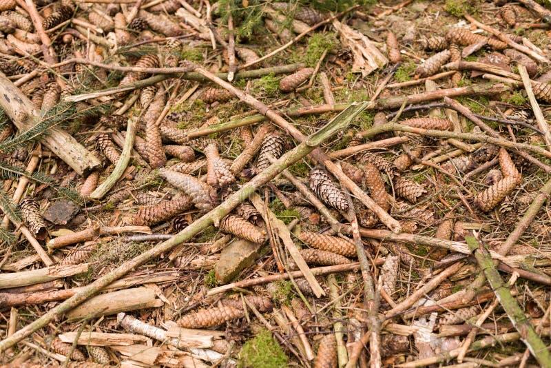 Terrestre vista de fondo natural Textura del suelo forestal textura de fondo abstracta de chips de madera fotos de archivo