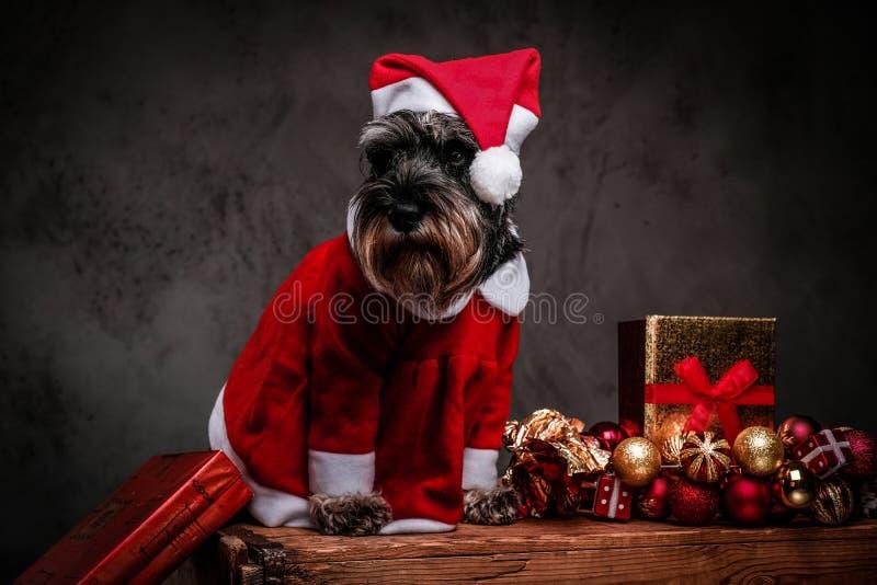 Terrier écossais mignon utilisant le costume de Santa se reposant sur une palette en bois entourée par des cadeaux et des boules  photo stock