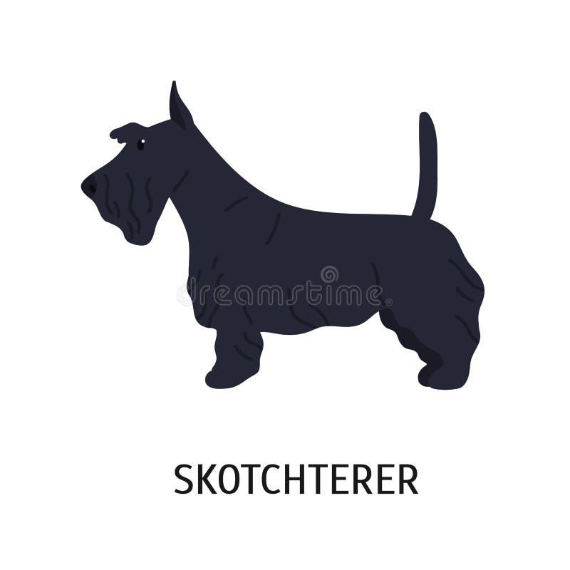 Terrier écossais ou Scottie Petit chien adorable de chasser la race, vue de côté Beau petit animal de compagnie de race mignon illustration de vecteur