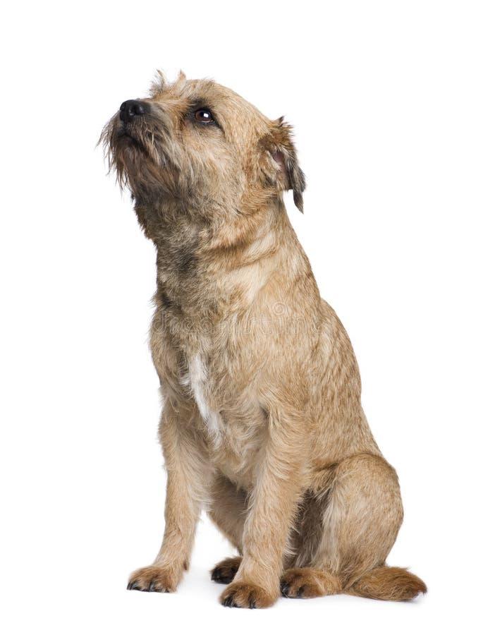terrier граници стоковое изображение