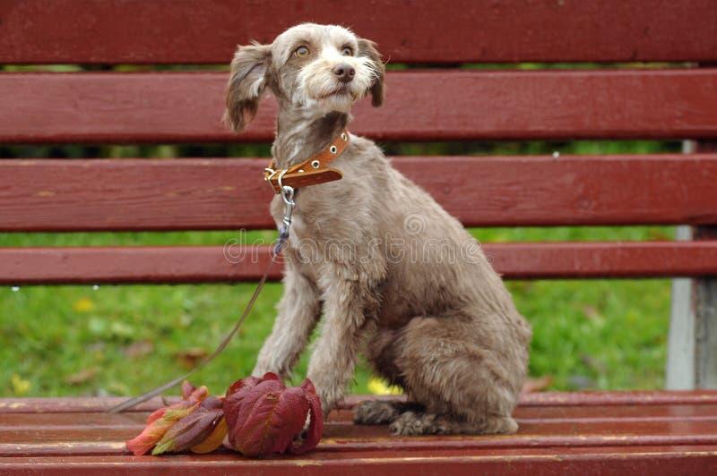 Download Terrier fotografering för bildbyråer. Bild av hundkoja - 27288335
