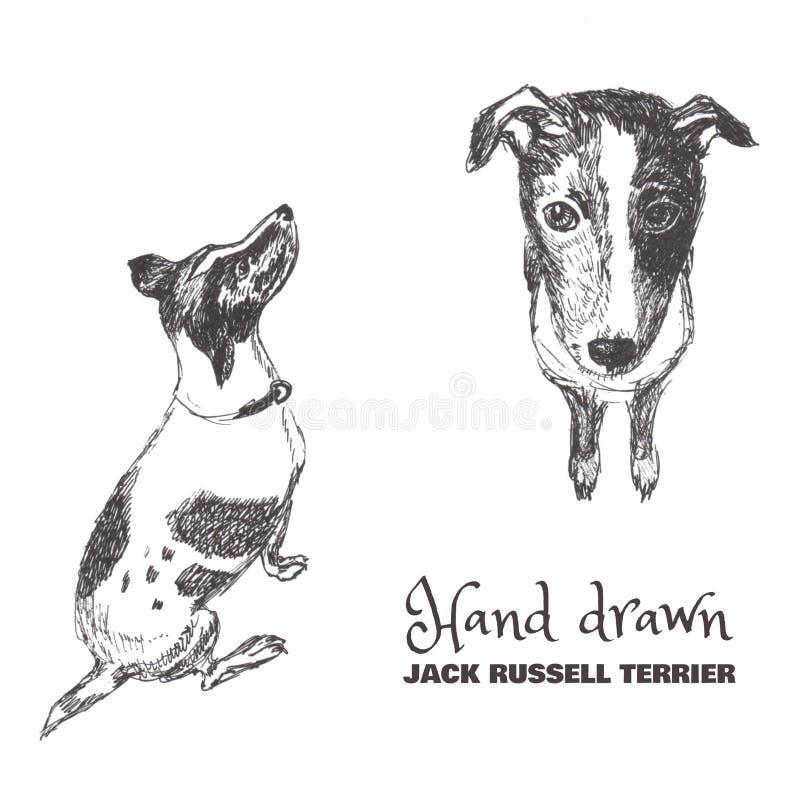 Terrier bosquejado a mano de Russell del enchufe stock de ilustración