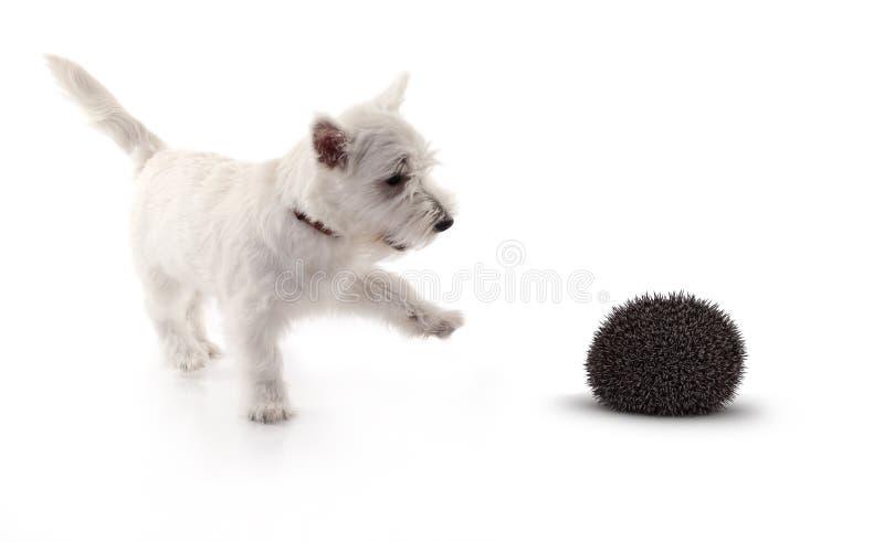 Terrier che gioca con il maiale della barriera 3d fotografia stock