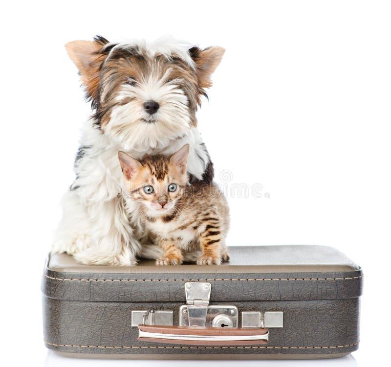 Terrier de Biewer-Yorkshire et chat du Bengale se reposant sur une valise D'isolement sur le blanc photographie stock libre de droits