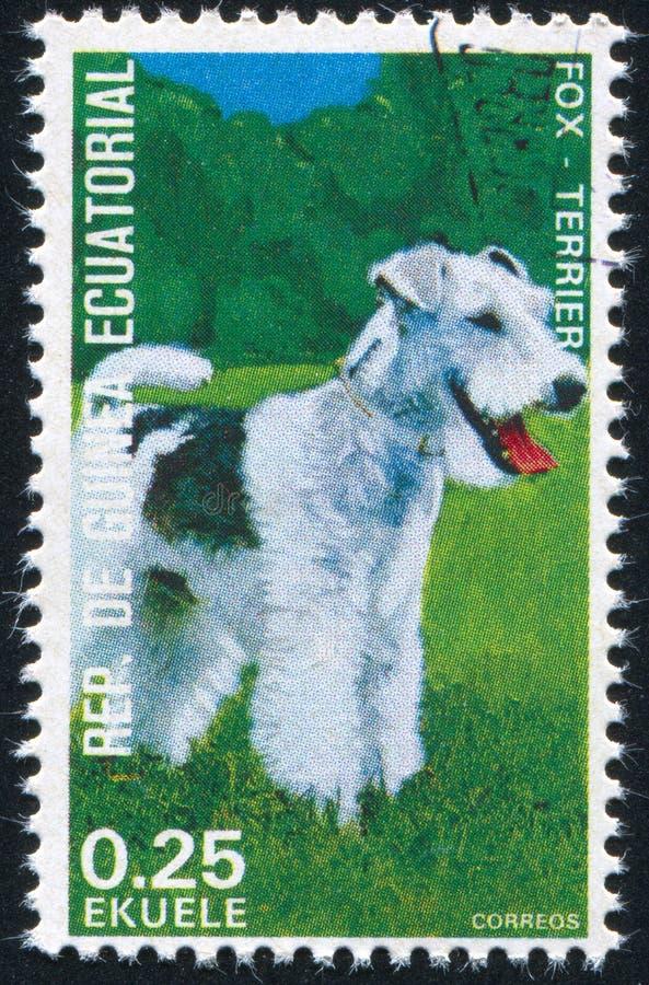 Terrier de Fox foto de stock