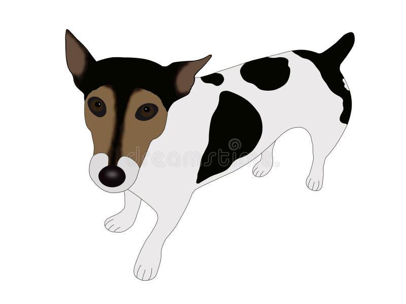Terrier de Gato Russell ilustración del vector