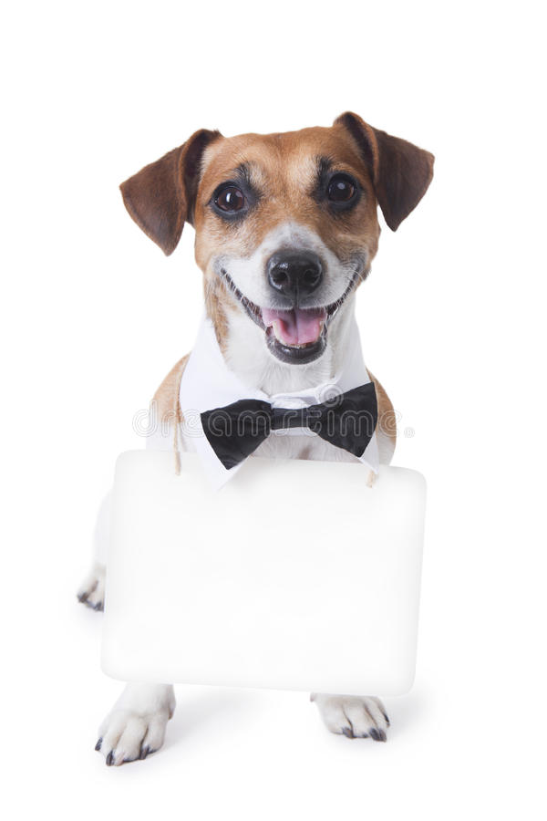 Terrier de Jack Russell del perro fotografía de archivo