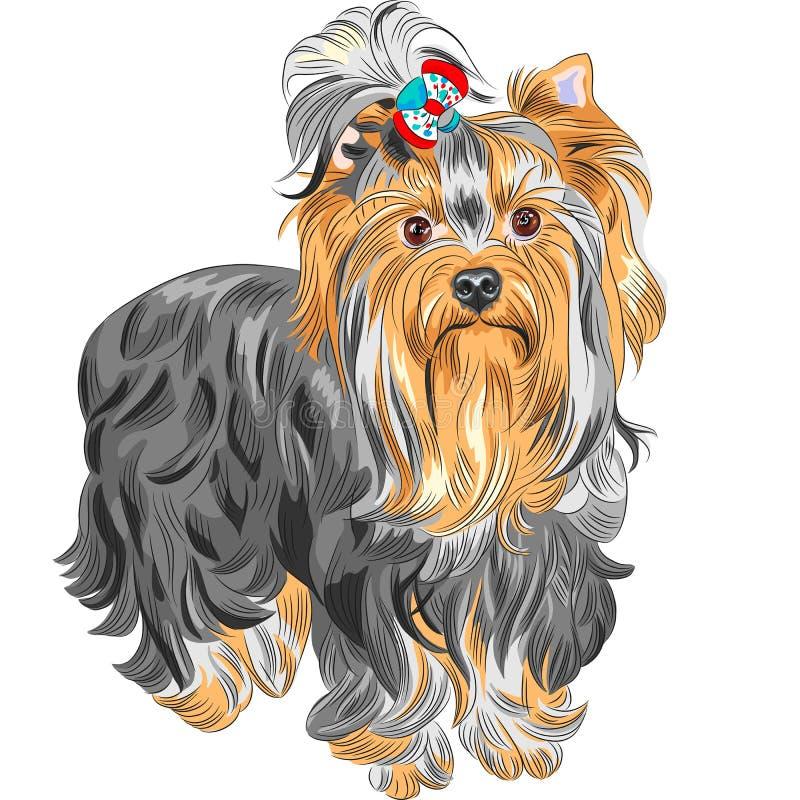 Terrier de Yorkshire de pure race mignon de chien de vecteur illustration libre de droits
