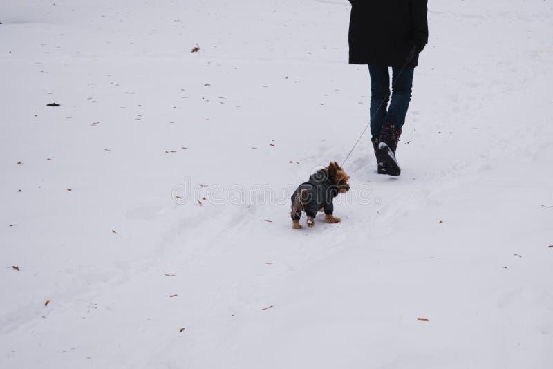 Terrier de Yorkshire infeliz imágenes de archivo libres de regalías