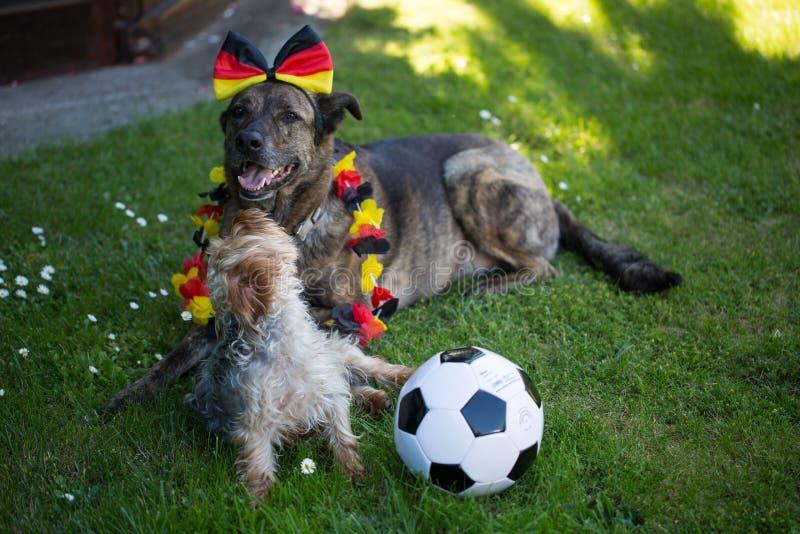 Terrier de Yorkshire y un sheperd alemán con fútbol imagenes de archivo