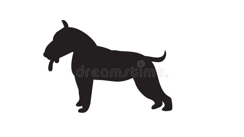 Terrier di Bull fotografia stock libera da diritti
