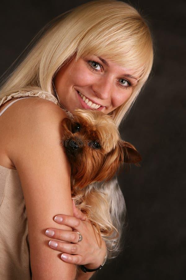 Terrier di Yorkshire immagini stock libere da diritti