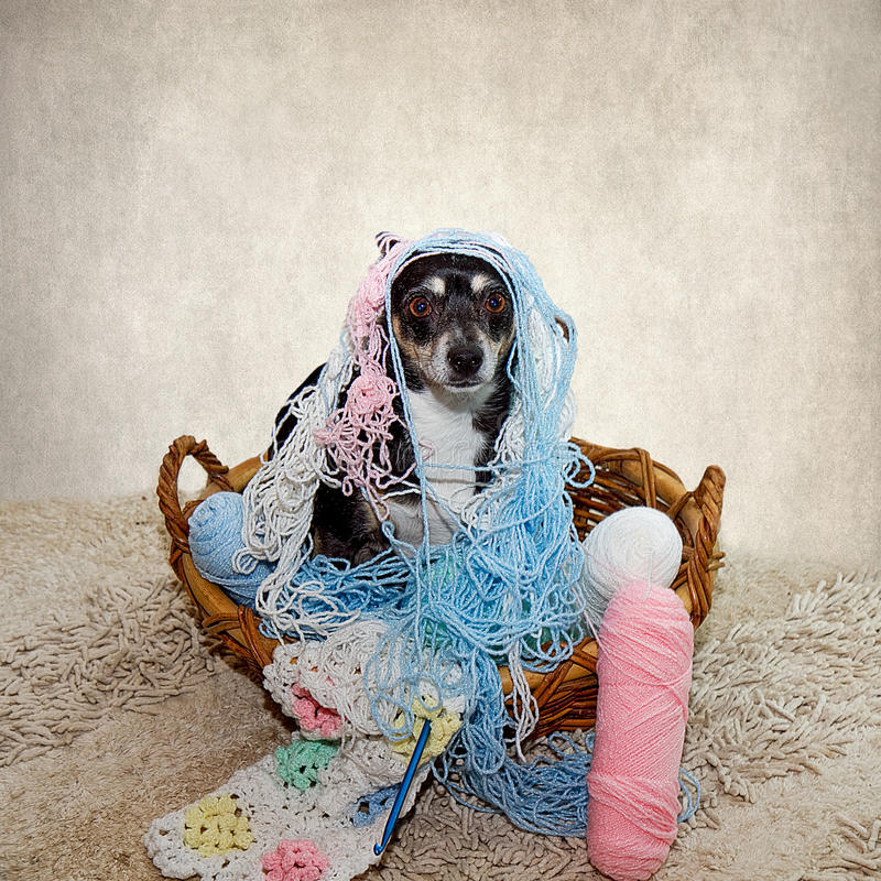 Free Terrier Dog Tangled In Yarn Royalty Free Stock Photos - 56072678