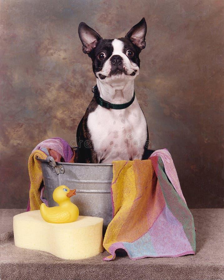 Terrier in einer Wanne lizenzfreie stockbilder