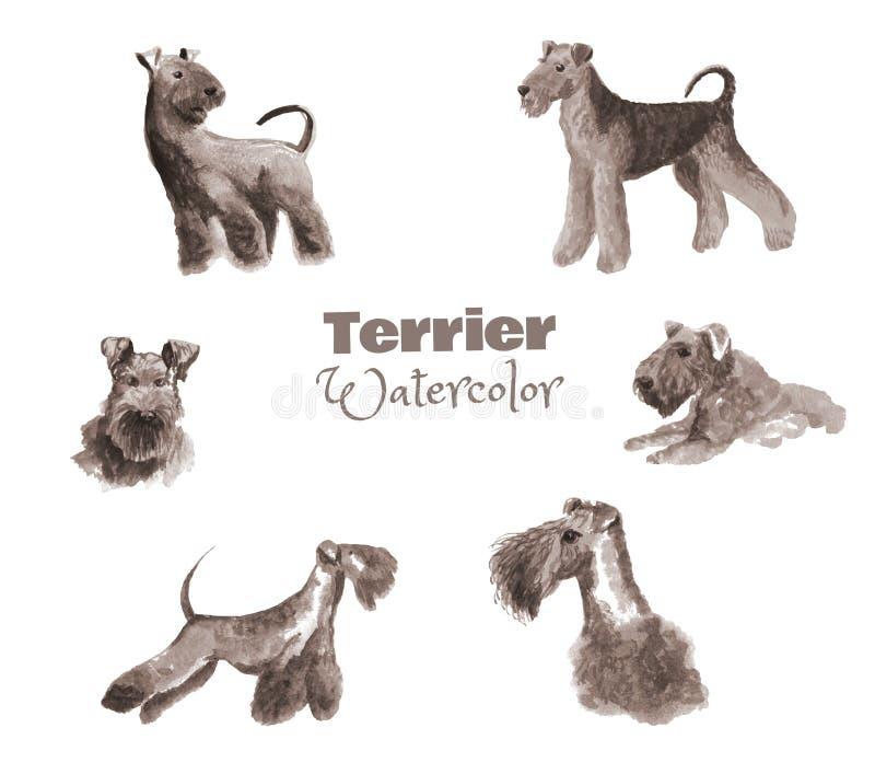 Terrier a mano de la acuarela Sistema de color monocromático del perro pedigrí aislado en blanco imagen de archivo libre de regalías