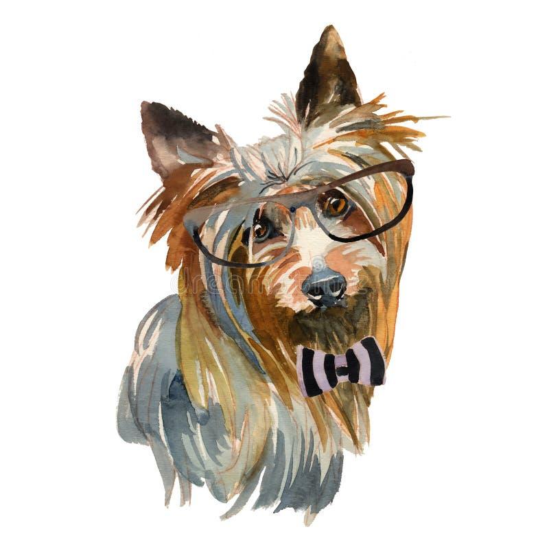 Terrier serico australiano - dipinto a mano, isolato su backg bianco illustrazione vettoriale