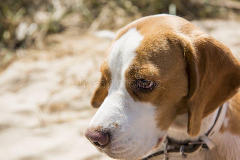 Terrier valp på solig bakgrund för vår Storen specificerar! royaltyfri foto