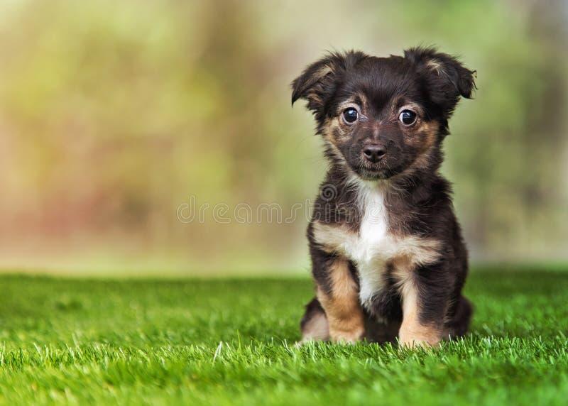 Terrier-Welpe, der draußen sitzt lizenzfreies stockfoto