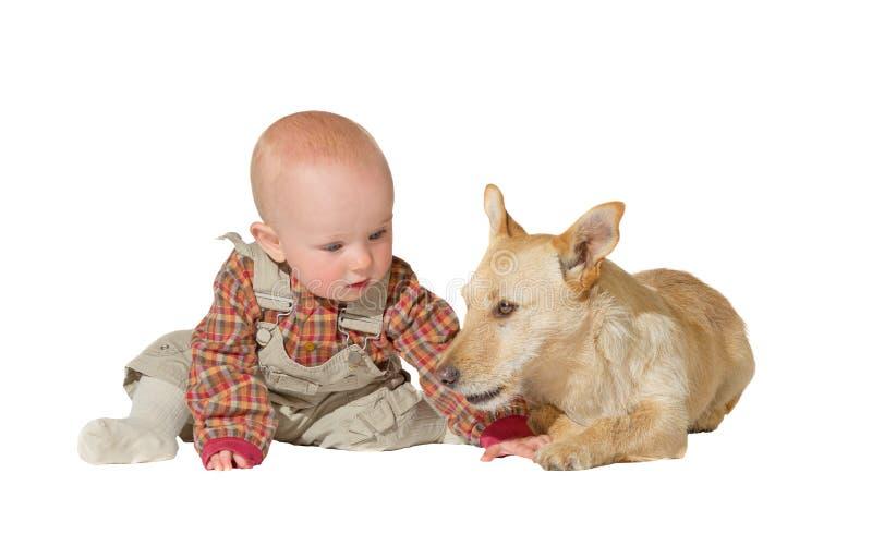 Terrier y bebé de Gato Russel foto de archivo libre de regalías