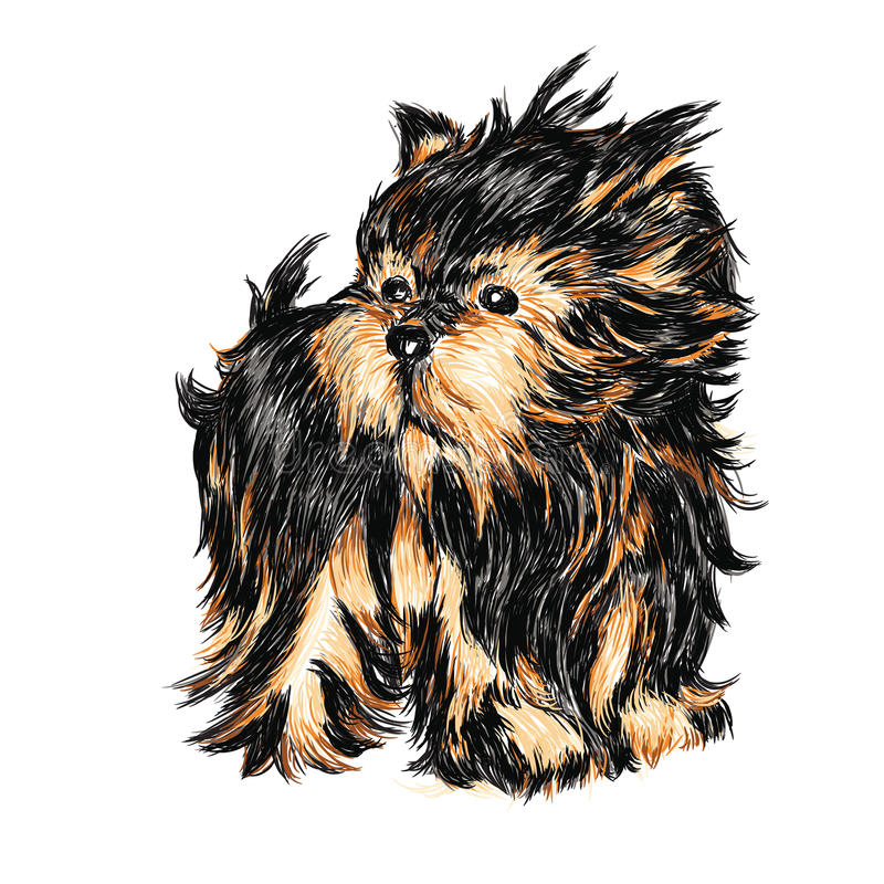 terrier yorkshire иллюстрация вектора